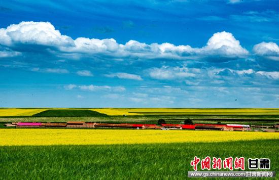 """张掖山丹县聚力打造""""如意花海""""推动全域旅游"""