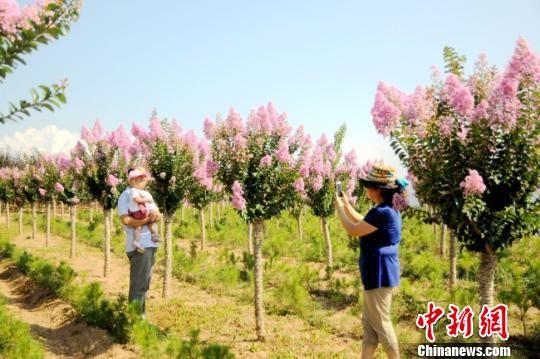 """甘肃徽县""""苗旅融合"""":农民卖盆景风景多径增收"""