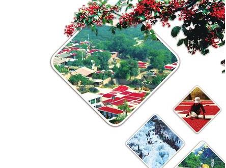 积石山 小花椒撑起致富产业 大旅游描绘美好明天