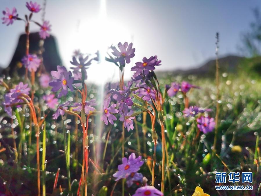 甘肃肃南:六月风光无限好 鲜花争艳草木新