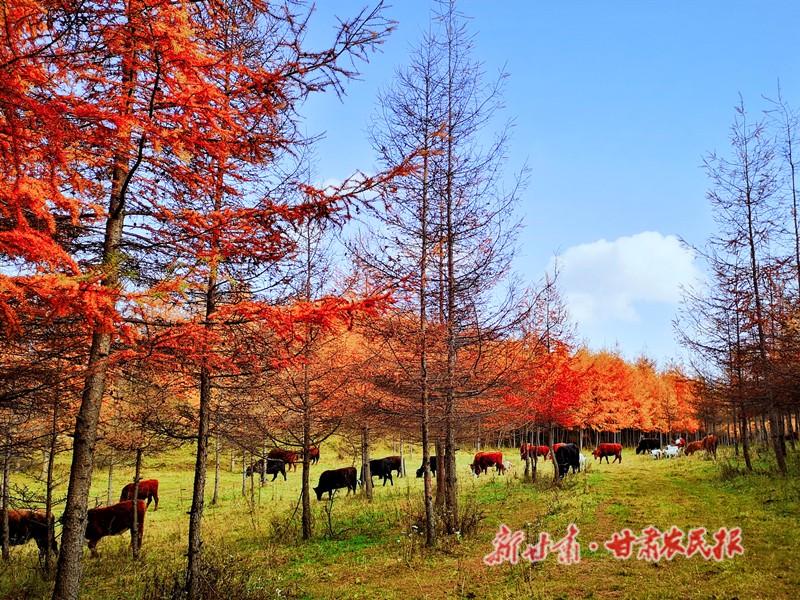 好美!武山温泉深秋景色如画