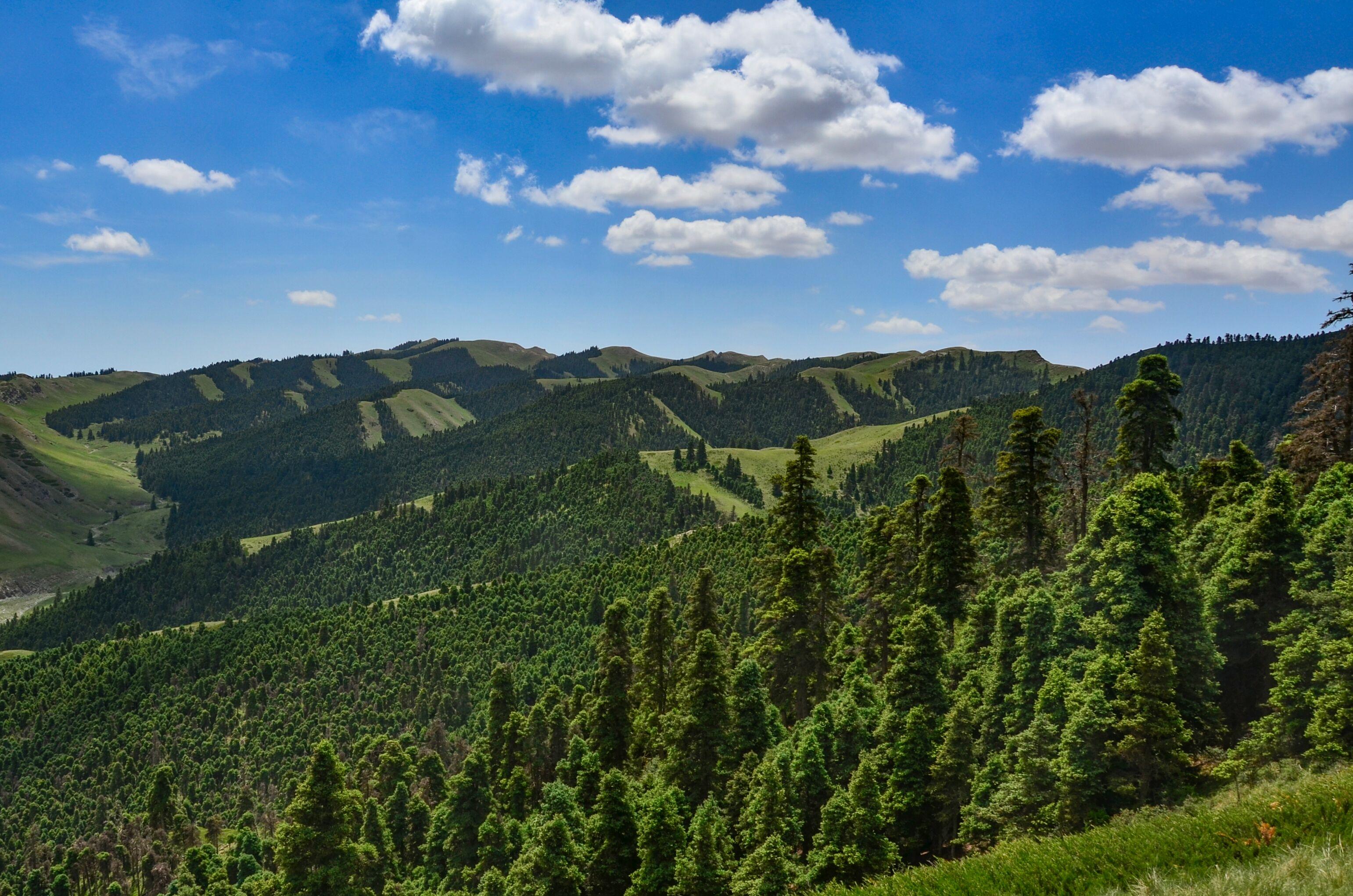 """""""沙漠绿岛""""——寿鹿山国家森林公园"""