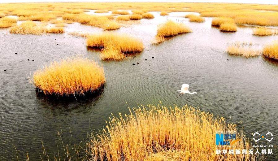 """【""""飞阅""""中国】航拍""""沙漠明珠""""青土湖:冰雪消融漾碧波"""