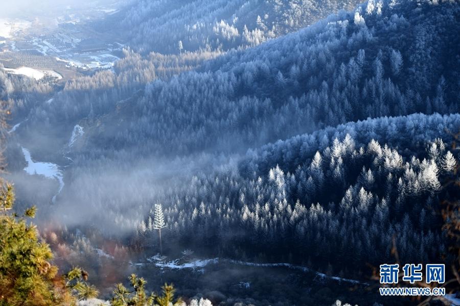渭水源头雾凇美