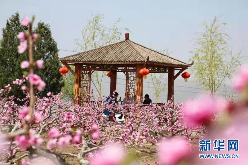 甘肃秦安:畅游桃花会 共享乡村文化宴