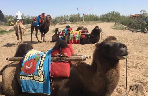【五一游甘肃】武威凉州区于5月1日-5日举办首届沙漠绿舟嘉年华活动