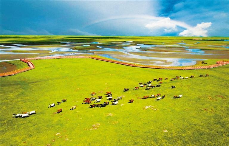 """玛曲河曲马场 中国最美湿地草原的""""颜值担当"""""""