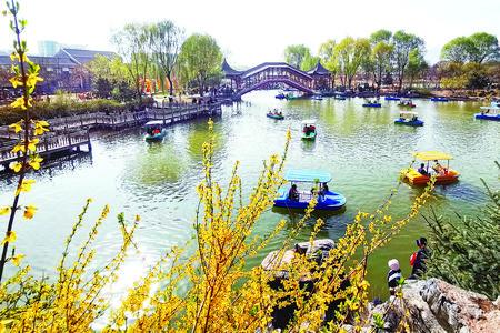 甘肃:赏花游激活乡村经济