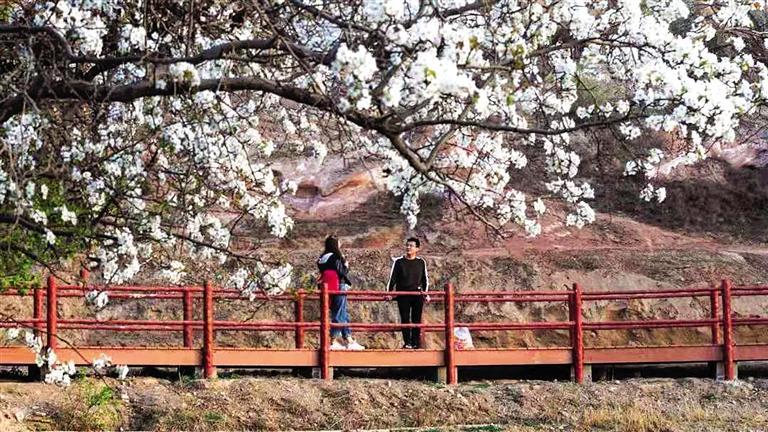千树梨花始盛开五彩丹霞等客来 平川区水泉镇邀您来踏春