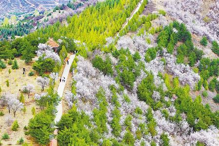徜徉在四月的漳县泰山森林公园