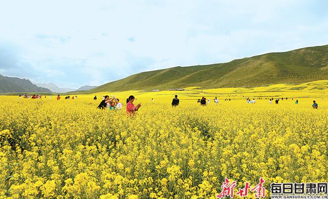 民乐县扁都口休闲旅游区油菜花进入盛花期 成为游客旅游观光的打卡胜地